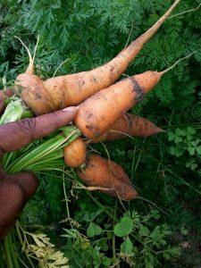 2014-02-13 -carrots