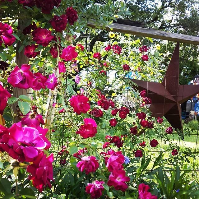 garden-life-3