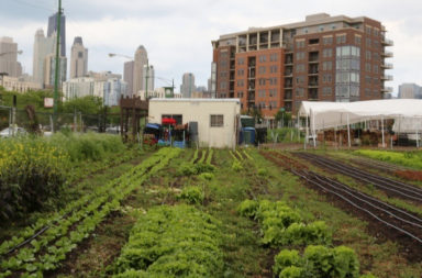 city-farm-in-feature-article